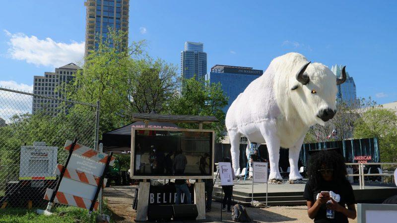 white-bull